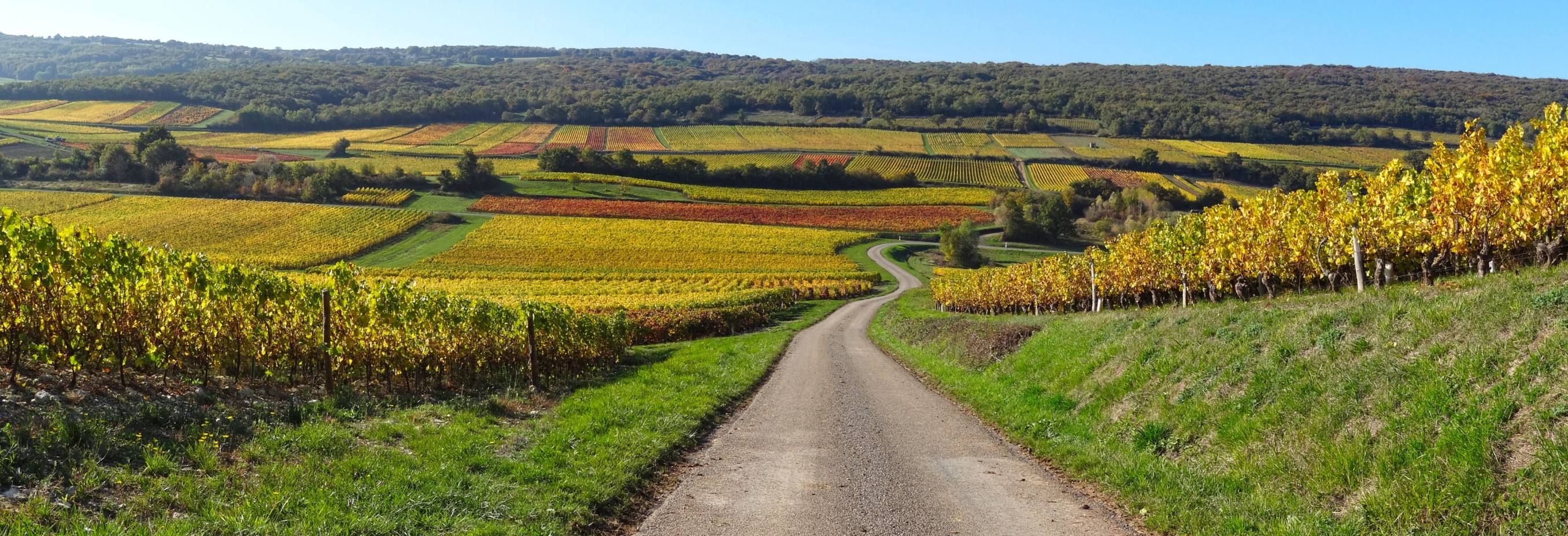 Chemin de vigne